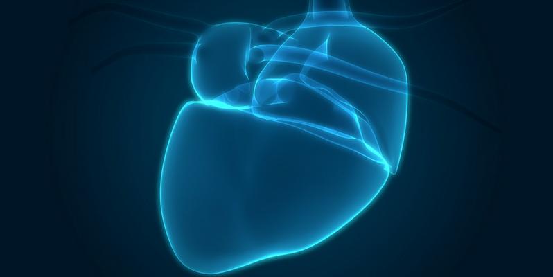 Researchers 3D-Print A Human Heart